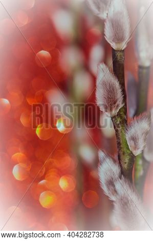 Natural Background With Bokeh. Red-orange Background With White Buds. Willow And Bok Kittens. Willow