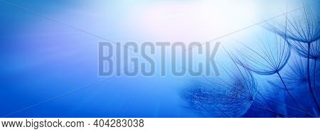 Abstract Background For Design. Dandelion Seeds On A Blue Beautiful Background With Soft Focus. Blue