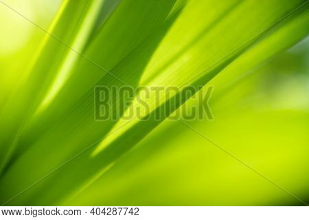 Closeup View Of Natural Green Leaf In Garden Against Green Blur Background And Sunlight With Copy Sp