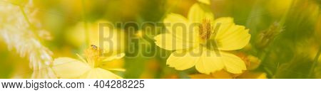 Closeup View Of Natural Yellow Flower With Bug In Garden Against Green Blur Background And Sunlight