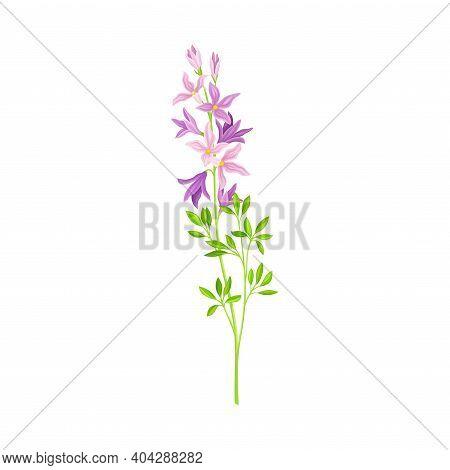 Flower Stem Or Stalk With Violet Florets As Meadow Or Field Plant Vector Illustration