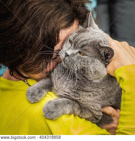 Woman In Yellow Clothing Holding Her Lovely Senior British Shorthair Cat With Yellow Eyes. Animal Lo