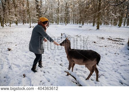 Woman Is Hand Feeding Fallow Deer In Garden Of Medieval Castle Blatna, Beautiful Deer With Branched