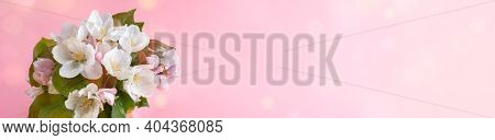 Wide Festive Floral Banner. Bouquet Of Wet Blooming Pink Apple Tree Or Sacura Twigs On Pink Backgrou