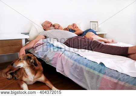 Rough Collie Dog Is Lying Near To The Bed And Resting In Morning, While His Owners Are Sleeping On T