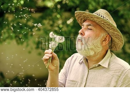Harmony Of Soul. Elderly Man In Straw Summer Hat. Grandpa Senior Man Blowing Dandelion Seeds In Park