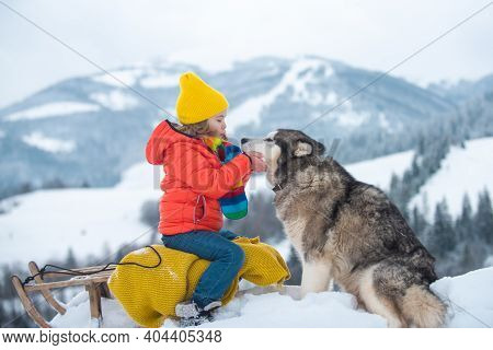 Winter Children With Husky Dog In The Snow. Siberian Husky With Blue Eyes In Winter Forest, Austria