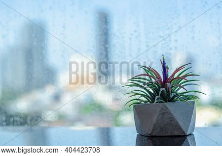 Air Plant - Tillandsia In Modern Pot Puts Beside Window That Have Rain Drop With Blurred City Backgr