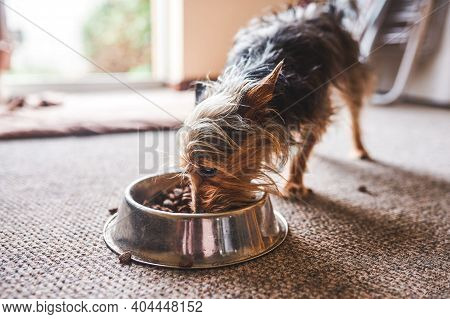 Shot Of An Adorable Dog Eating Food Out Of His Bowl