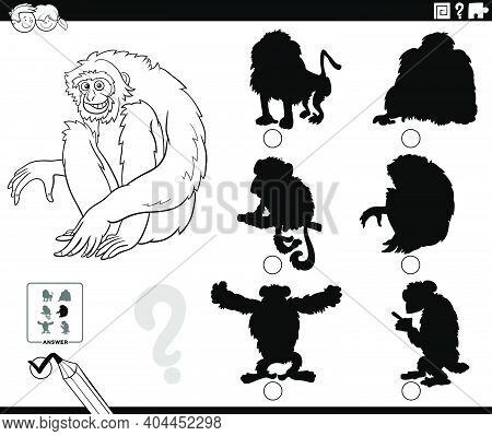 Black And White Cartoon Illustration Of Finding The Right Shadow To The Picture Educational Game For