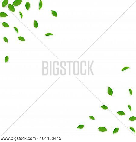 Falling Green Leaves. Fresh Tea Chaotic Leaves Fly