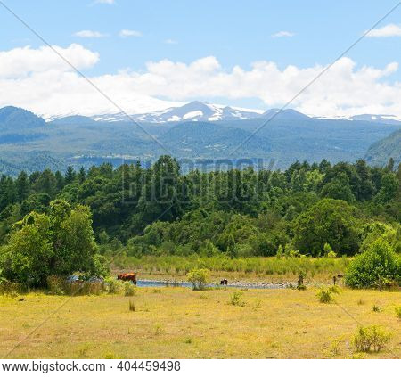Panoramic Villarica National Park, In Conaripe, Panguipulli, With The Villarica Volcano Covered By T