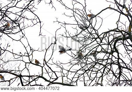 Birds On The Branches. Bare Tree Branches And Birgs On White. Branches In Winter. Selective Focus
