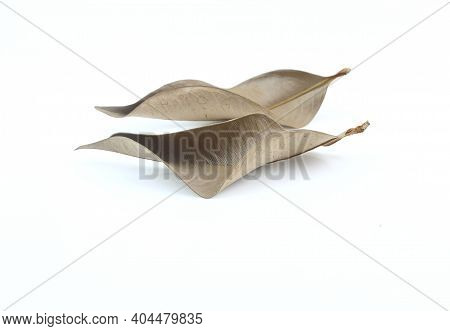 Two Dry Leaves On White Background - Dried Leaf
