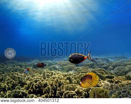Marine Life In The Red Sea. Red Sea Coral Reef With Hard Corals, Fishes And Sunny Sky Shining Throug