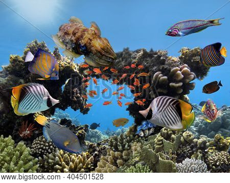 Hard Coral With Fish. Red Sea - Coral Reef Life