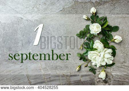September 1st . Day 1 Of Month, Calendar Date. Stylish Roses Flat Lay. White Roses Border On Pastel