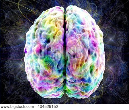 Brain Activity, Colored Human Brain Model, View Top, 3d Illustration