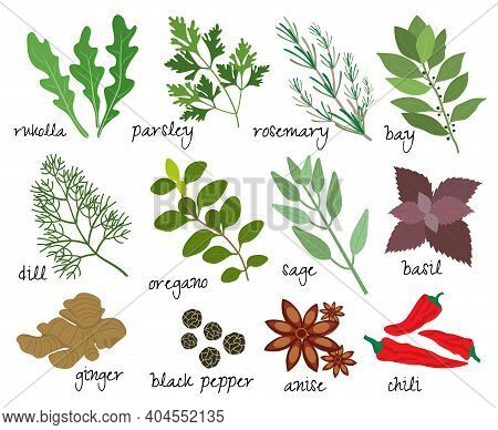 Set Of Vector Illustrations Of Herbs And Spices With Sprigs Of Fresh Rosemary  Rocket  Parsley  Bay