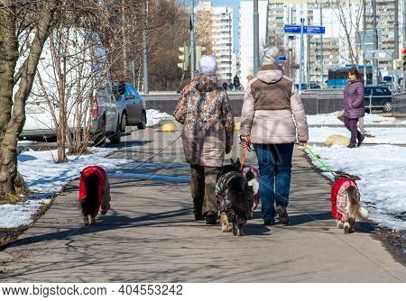 Moscow, Russia - Apr 04. 2017. Two Women Lead Four Dogs Around The City On Leashes