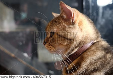 Side View Head Part Of Adorable Cat
