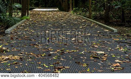 Blurred Foreground And Background Of Walking Track Amongst Bushland With Leafy Surface.