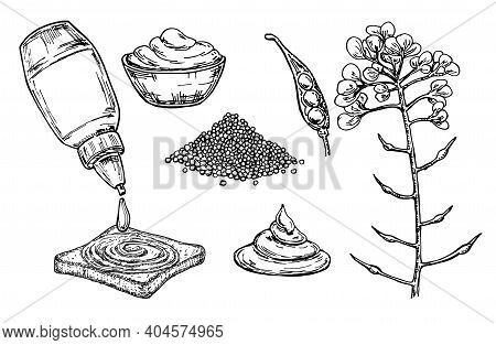 Mustard Sauce In Bowl Vector Drawing. Hand Drawn Food Ingredient. Botanical Flower Branch And Seed P