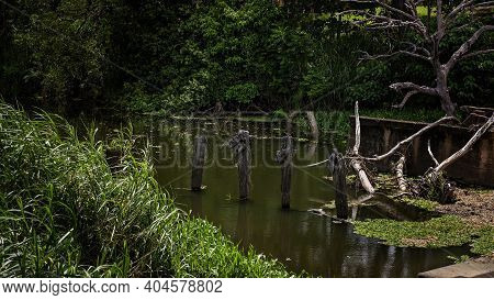 Decaying Timber Posts Once Used For A Bridge Crossing Across A Creek