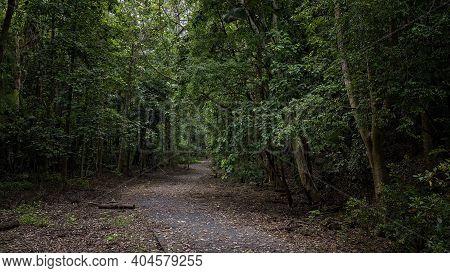 Pathway Into Dense Bushland For The Public To Enjoy A Walk