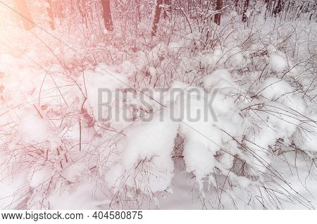 Winter Wonderland Covered By Snow With Picturesque Warm Sunshine