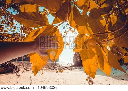 Thailand sun beach: woman hand touching yellow exotic tree leaf. Girl looking from foliage at sand coast. Beautiful autumn landscape at ocean bay on tropical resort island. Asian tropic plant scene