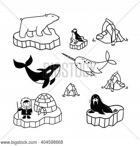 Simple Doodle Drawings About Polar Inhabitants - Eskimo, Bear, Narwhal, Killer Whale, Puffin And Wal