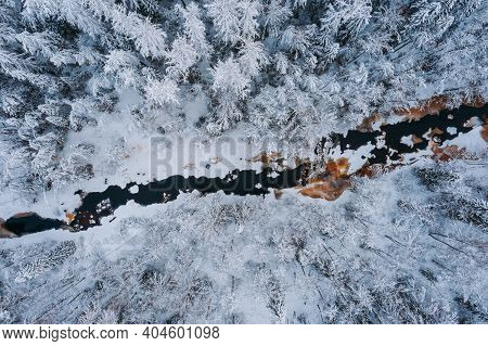 Aerial View Of The Winter Forest, Lindulovskaya Grove. The Lintulovka River Is Brown. Siberian Larch