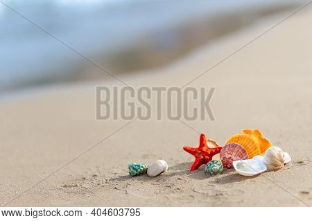 Colorful Sea Shells On The Seashore Sand Beach, Blurred Blue Background, Summertime And Holiday Conc