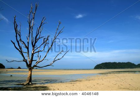 Dead Tree On The Beach
