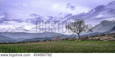 Leafless Tree In A Green Meadow With The Snowy Mountains In The Background In The Village Of Laspuna
