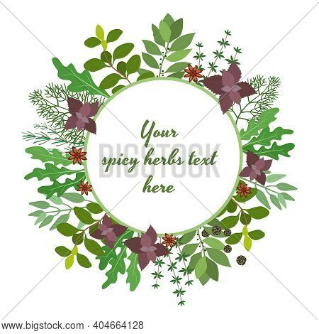 Vector Illustration Of Fresh Cooking Herbs In A Circular Frame With Oregano  Parsley  Basil  Rosemar