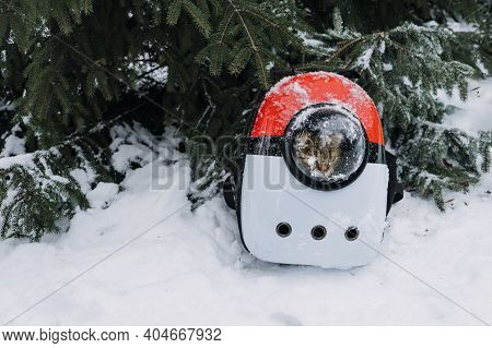 Cat In Pet Carrier Backpack In Winter Park, Forest. Bubble Backpack Carrier For Cats, Airline-approv
