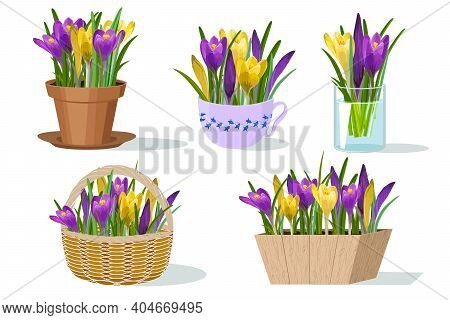 Illustration With Flowers In Different Flowerpots.multi-colored Crocuses In Different Flowerpots On
