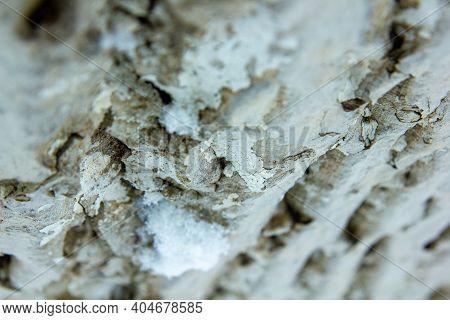 Close Up Of A Bark, Bark Of A Tree, Hd Texture Of A Bark