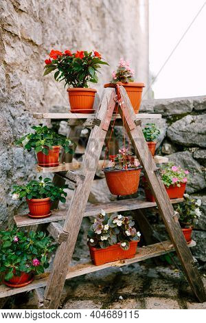 Bookcase Shelf With Flowers. Flower Pots Are Brown With Flowers On A Wooden Stepladder. Diy Wooden S