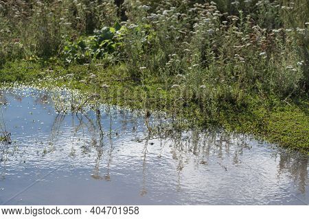 A Large Spring Puddle In A Green Field. Clouds And Grass Are Reflected In The Puddle. The Concept Of