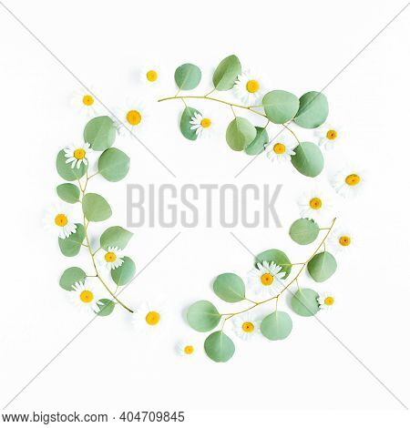 Round Wreath Frame Made Of Branches Eucalyptus Populus And Flowers Chamomile Isolated On White Backg