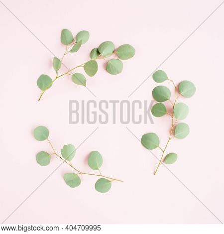 Round Wreath Frame Made Of Branches Eucalyptus Populus Isolated On Pink Background. Lay Flat, Top Vi