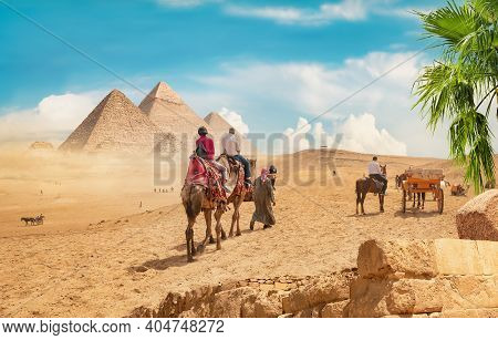 Camels In Sandy Desert Near Pyramids At Day