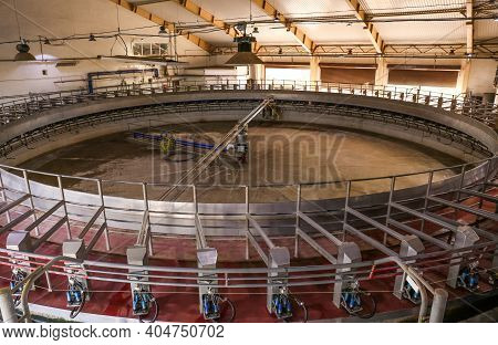Automated Rotary Milking Parlor. Modern Dairy Farm