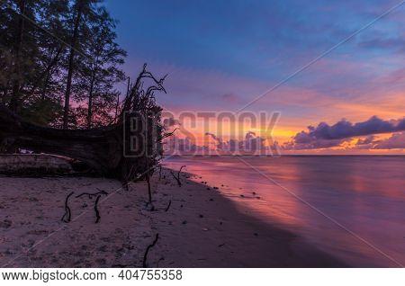 ?ld wood snag on tropical beach at beautiful sunset. Nature background. Nai Yang beach. Phuket. Thailand