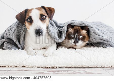 Cat and dog. Pets at home together under knitted plaid