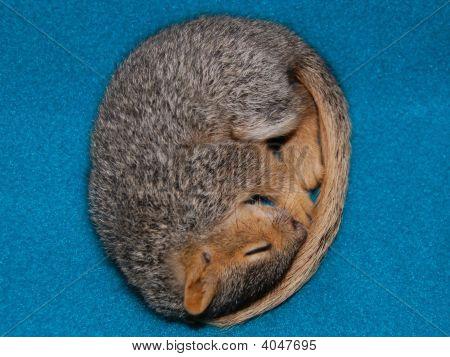 Babysquirrelsleeping