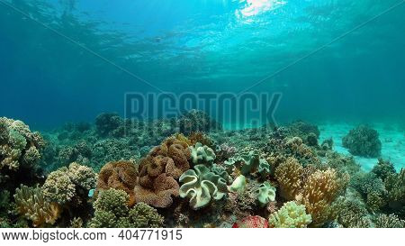 Coral Garden Seascape And Underwater World. Colorful Tropical Coral Reefs. Life Coral Reef. Philippi